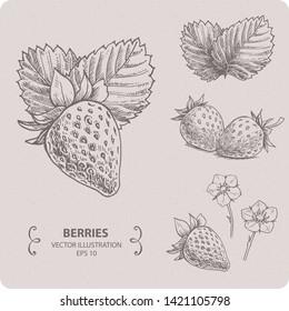 Sweet Strawberry, hand drawn vector illustration
