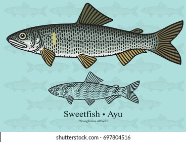 Sweetfish, Ayu. Vector illustration with refined details and optimized stroke that allows the image to be used in small sizes (in packaging design, decoration, educational graphics, etc.)