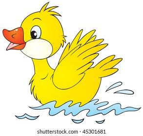 swimming yellow duckling