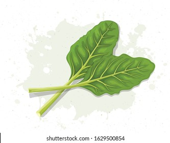Swiss Chard Leaves Vector Illustration Stock Vector Royalty Free 1629500854