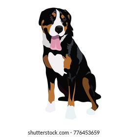 Appenzell Mountain Dog Images Stock Photos Vectors