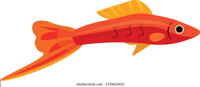Swordfish small fish on a white background, orange and yellow tones are used. A swordsman for a home aquarium is a very beautiful fish.