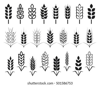 Symbols. for logo design Wheat. Agriculture, corn, barley, stalks, organic plants, bread, food, natural harvest, vector illustration on white background isolated.
