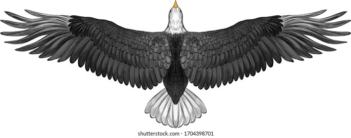 symmetrical eagle with spread wings black and white American vector illustration
