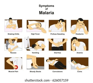 Symptoms of Malaria infographic diagram with conceptual drawing including shaking chills fever sweating headache nausea vomiting diarrhea anemia coma for medical science education