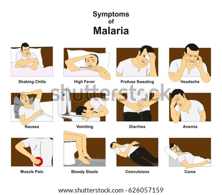 symptoms malaria infographic diagram conceptual drawing stock vector