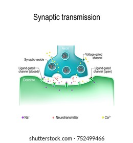 Synaptic transmission. Structure of a typical chemical synapse. Neurotransmitter release mechanisms. Neurotransmitters are packaged into synaptic vesicles transmit signals from a neuron to a target ce