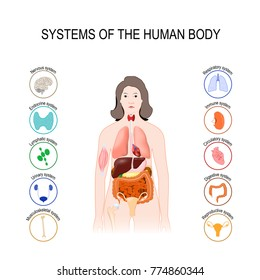 systems of the human body: immune, nervous, muscule, skeletal, lymphatic, urinary, respiratory, endocrine, reproductive, circulatory and digestive system.  Medical poster with internal organs on white