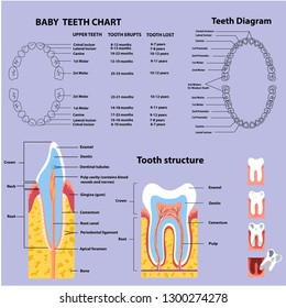 Table of growth and structure of teeth