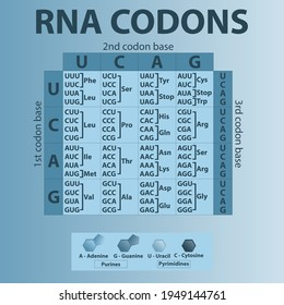 Codon High Res Stock Images Shutterstock