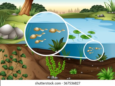 Tadpoles swimming in a pond illustration