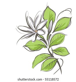 Tahitian Tiare - vector flower