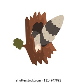 Tail of raccoon sticking out of hollow tree, hollowed out old tree and cute animal cartoon character inside vector Illustration on a white background