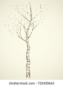 Tall Birchtree. Romantic outdoor wintertime scenery view and space for text on evening sky. Freehand linear dark ink hand drawn picture logo sketchy in artistic scribble retro draft style pen on paper