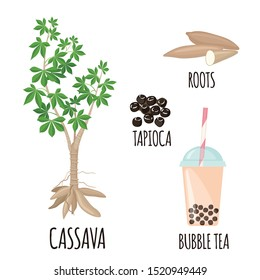 Tapioca plant set with cassava tree, roots,bobs and bubble milk tea in flat style isolated on white background. Vector illustration.