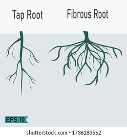 taproot and fibrous roots in a flat style. illustration of taproots and fibrous roots. plant theme