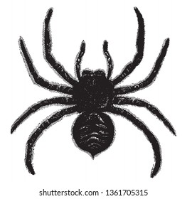 Tarantula comprise a group of large and often hairy arachnids belonging to the Theraphosidae family of spiders, vintage line drawing or engraving illustration.