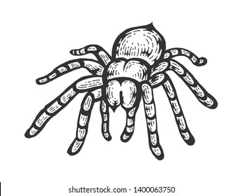 Tarantula Lycosa wolf spider sketch line art engraving vector illustration. Scratch board style imitation. Black and white hand drawn image.