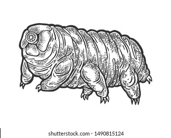 Tardigrade water bear moss piglet micro animal sketch engraving vector illustration. Tee shirt apparel print design. Scratch board style imitation. Black and white hand drawn image.