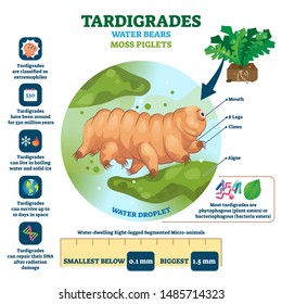 Tardigrades Water Bears vector illustration. Labeled described moss piglets infographic. Educational microscopic animal with survival resilient skills. Zoological characteristics structure closeup.