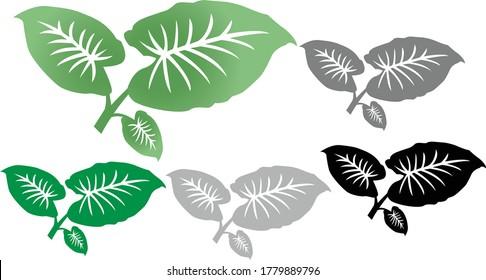 Taro Kalo Leaves Colocasia Esculenta Root vegetable Gabi Flat Concept Vector Illustration