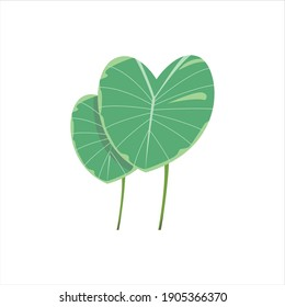 taro leaves and stems visualization digital design graphic 2d hd illustration from indonesia