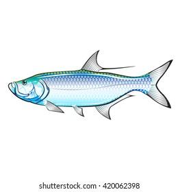 Tarpon Ocean Gamefish illustration vector