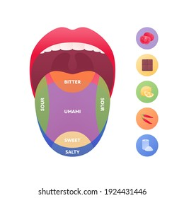 Taste scheme concept. Vector flat modern color illustration. Tongue with lips. Mouth tasty sense symbol. Umami, sweet, sour, bitter, salty symbol icons. Tongue zone infographic.