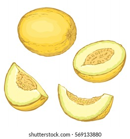 Tasty fresh sappy musk galia isolated on white backdrop. Vibrant color hand drawn picture sketch. View closeup