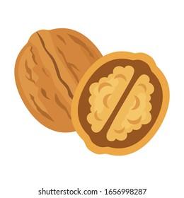 Tasty walnut on white background, vector illustration