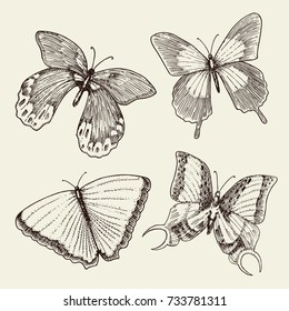 tattoo or boho t-shirt or scrapbooking design. Mystical esoteric symbol of freedom and travel. butterfly or Insect sketch. entomological collection. engraved hand drawn in old sketch and vintage style