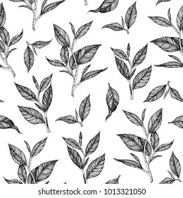 Tea leaf seamless pattern. Hand drawn vector illustration.  Design for vintage packaging. Engraved style.