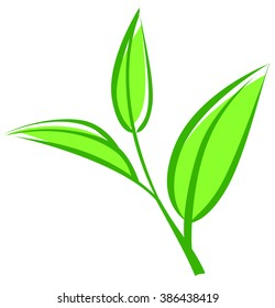 Tea leaves, young saplings