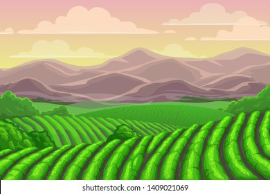 Tea plantation fields, cascade valley landscape with mount scenery. Vector Chinese or Sri Lanka meadows with mountains backdrop, terraced agriculture. Asian plants cultivation, rural countryside