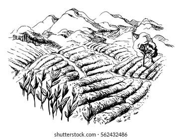 tea plantation landscape in graphic style