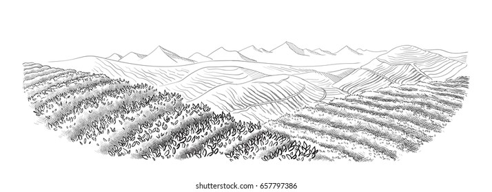 tea plantation landscape in graphic style, hand-drawn vector illustration.