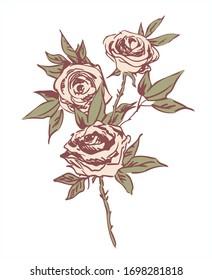 Tea Roses Bouquet. Hand Drawn Illustration.