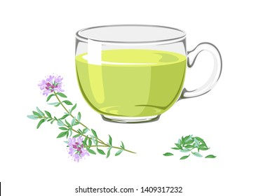 Tea with thyme and branch of medicinal plants with flowers. Tonic herbal drink in glass cup isolated on white background. Vector illustration of  healing infusion in cartoon flat style.