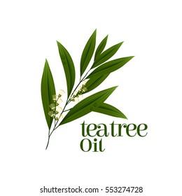 tea tree leaf vector