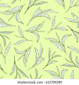 Tea tree leaves on light green background. Botanical style vector seamless pattern.