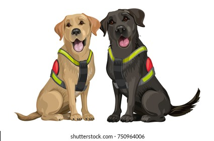 A team of rescue dogs, a yellow and black young labrador retriever, dogs for searching people under ruined buildings after an earthquake, a terrorist attack and tornado