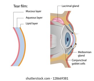 Tear film formation