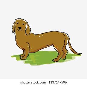 Teckel Dog Pet