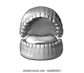 Teeth Gum engraving with monochrome color illustration isolated on white background