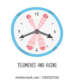 Telomeres and aging. Chromosome and DNA. Vector hand drawn illustration.