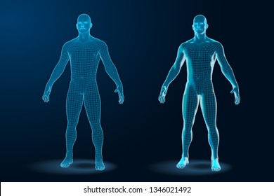 Temlate set of Human Body 3D Polygonal Wireframe Blueprint.
