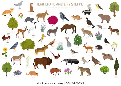 Temperate and dry steppe biome, natural region infographic. Prarie, steppe, grassland, pampas ecosystem.  Animals, birds and vegetations ecosystem design set. Vector illustration