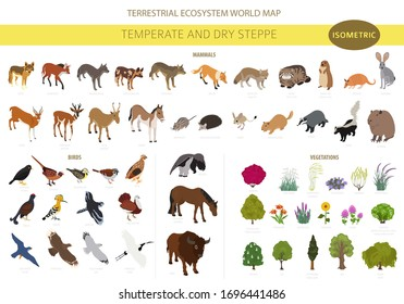 Temperate and dry steppe biome, natural region isometric infographic. Prarie, steppe, grassland, pampas. Animals, birds and vegetations ecosystem design set. Vector il