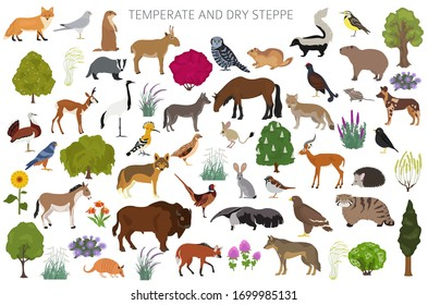 Temperate and dry steppe biome, natural region infographic. Prarie, steppe, grassland, pampas. Animals, birds and vegetations ecosystem design set. Vector illustration