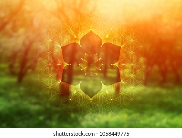 "Template of banner, horizontal format; Spiritual sacred geometry; ""Flower of life"" and lotus on psychedelic natural forest photographic background; Yoga, meditation and relax."